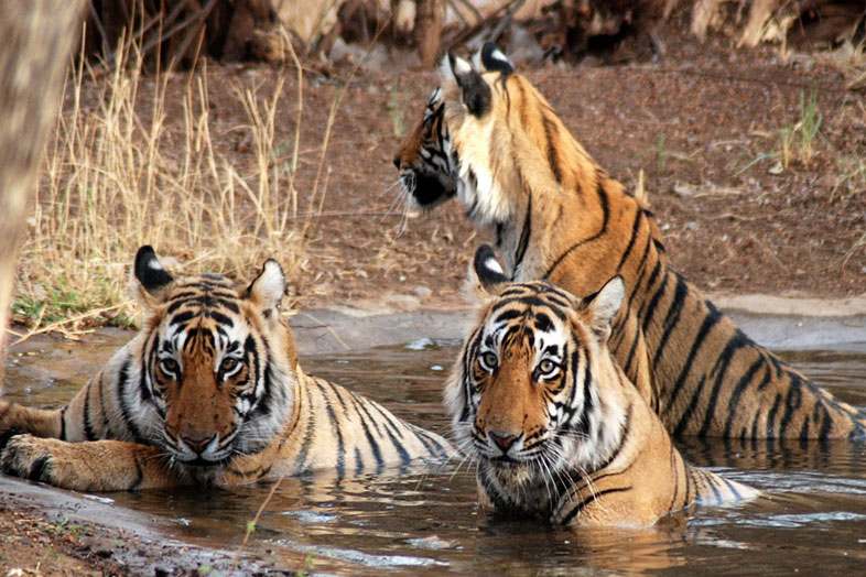 corbett holiday packages
